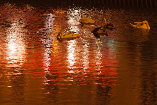 Swans float on the water at night