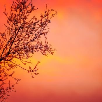 Blooming tree on sunset background