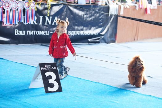 SAMARA,RUSSIA-AUGUST 26:Russian national dogs exhibition of all