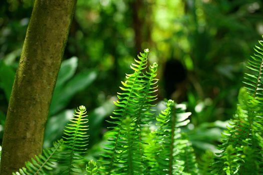 fern in the rainforest