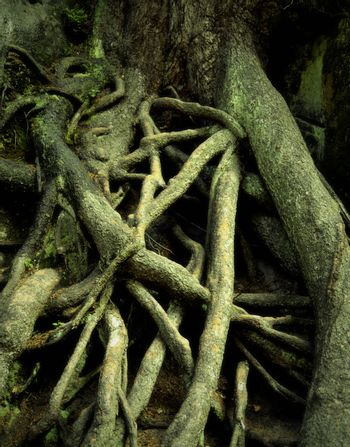 spooky roots