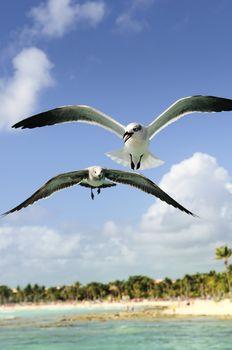A beautiful seagull