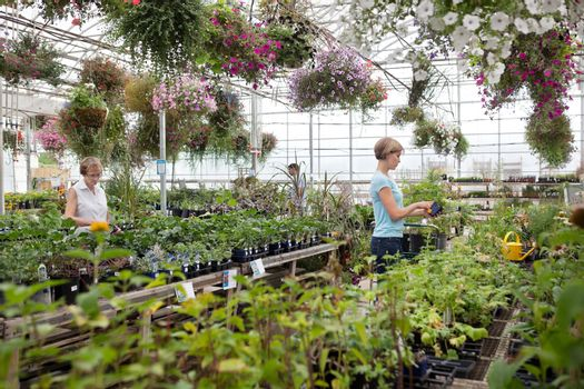 People shopping for plants at garden centre