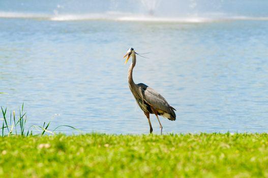 Crane with open beak
