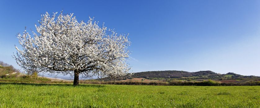 panoramic spring