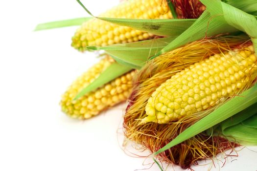 Three ears of corn isolated on a white background corner composition