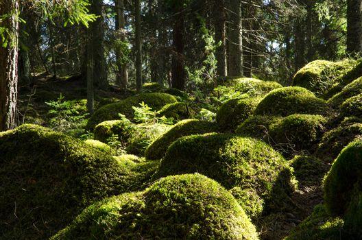 Soft mossy rocks