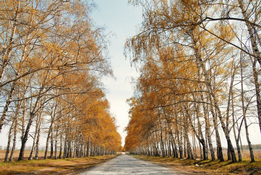 Perspective view onto the road between trees in late autumn. Natural light and colors