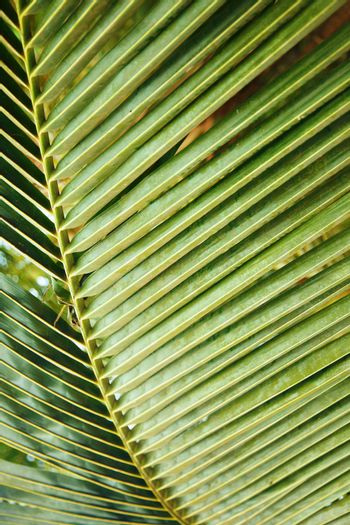 Close-up textured photo of the green palm leaf in the wild tropical forest