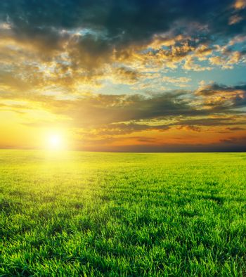 sunset over agricultural green field