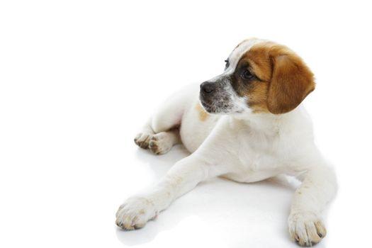 Attentive doggy