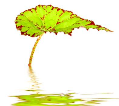 Green leave is the water