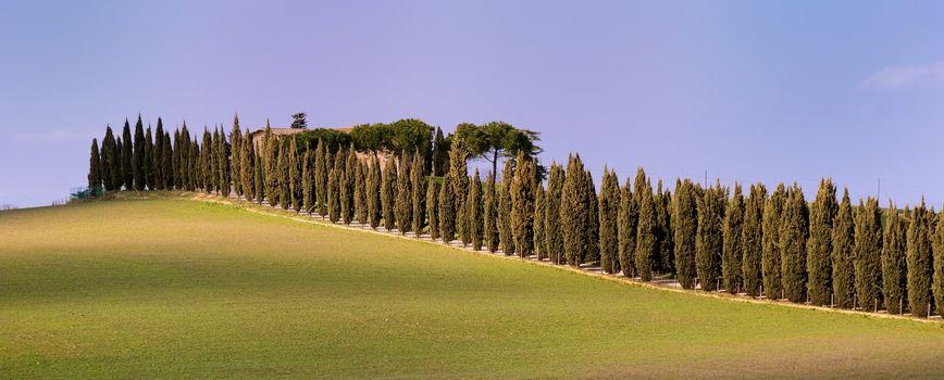Country Aveneu (Tuscany)