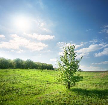 Blooming green tree