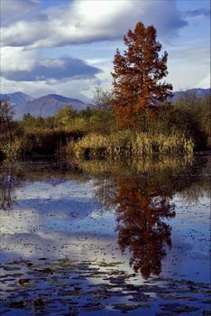 autumn lake and marsh moor