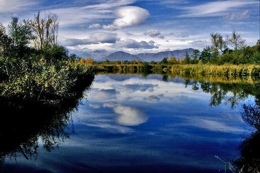 marsh moor marshy