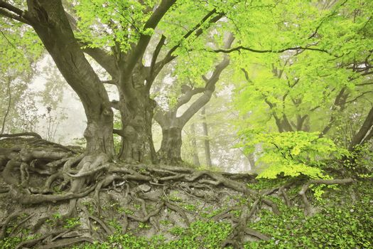 An image of a beautiful green spring forest