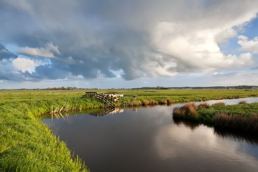 cloudscape over Dutch farmland with grazing sheep
