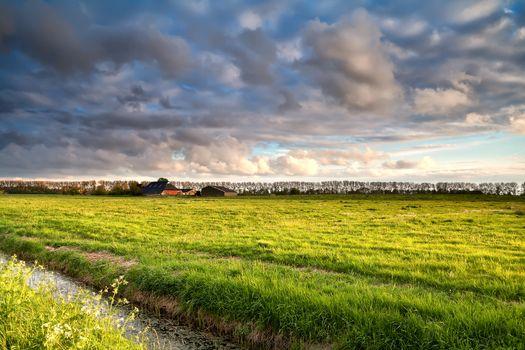 Dutch farmland in golden before sunset light
