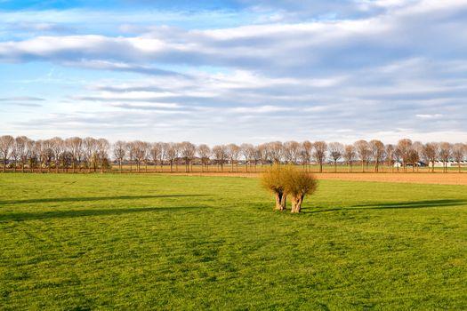 green meadows on Dutch farmland
