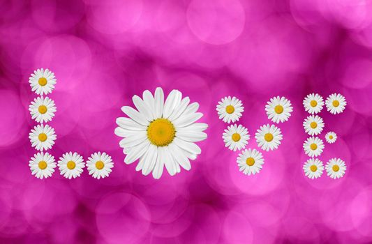the word love made in daisies flower on pink background