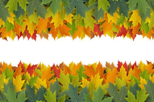 Autumn Leaves border design concept with maple leaf foliage arranged in a multi colored seasonal themed concept as a symbol of the fall weather on a white background.