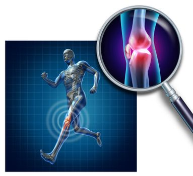 Sports knee injury with a running athlete showing the anatomical skeleton with a red highlight on the knee magnified with a magnifying glass as a symbol of body joint pain.