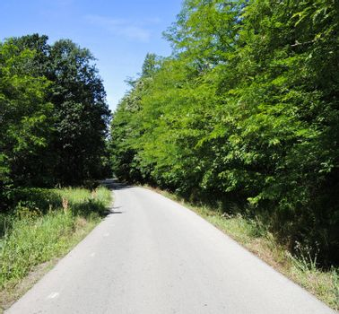 Road in the spring season