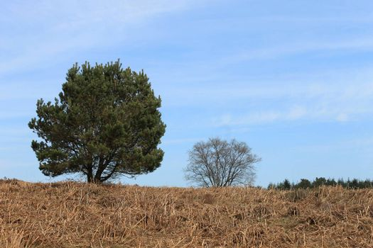 Green trees on moors in countryside with blue sky and cloudscape background.