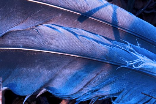 little  crow plumage blue and abstract