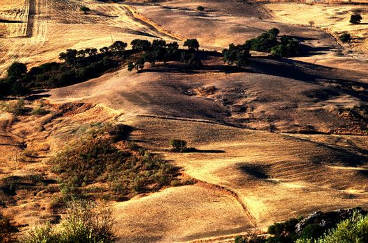 typical rural landscape in Andalusia
