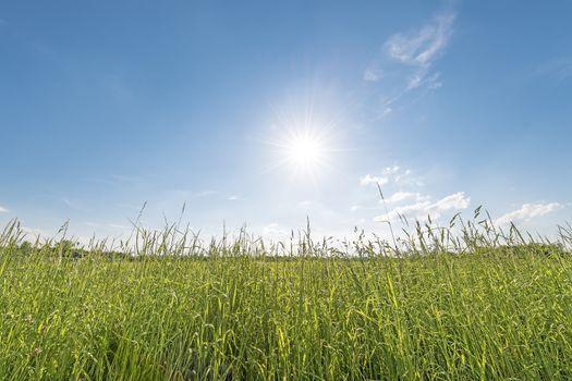 Meadow backlit horizontal