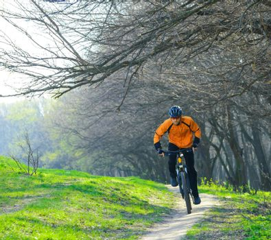 Cyclist Riding the Bike on the Trail in the Forest