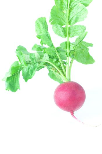 juicy red radish with green leaves isolated on white