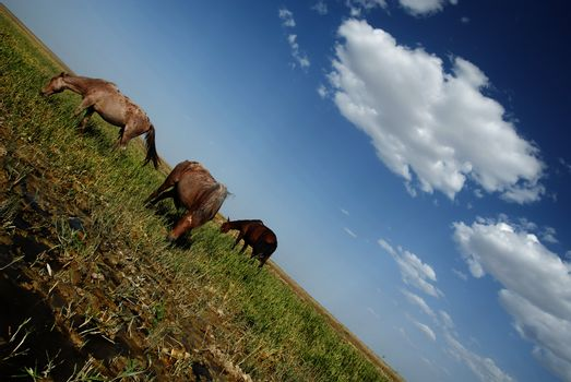 Serene horses