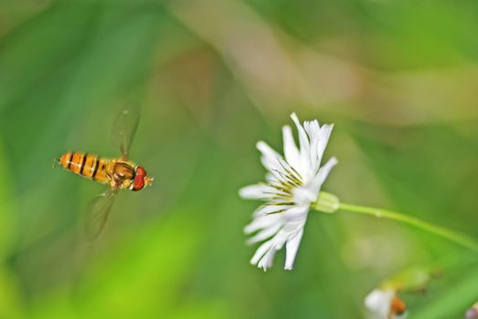 Bees are flying flowers