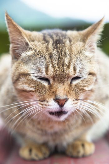 close up face of cat