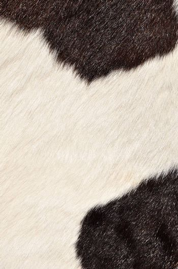 Brown and white hairy texture of cow