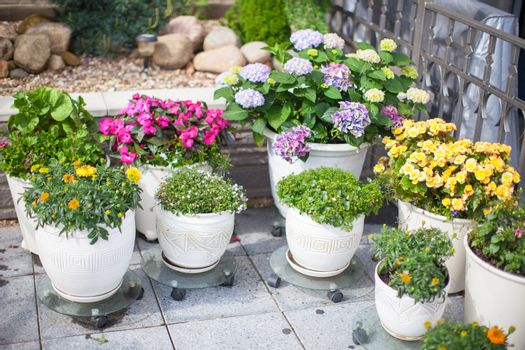 Beautiful colotful flowers in a flowerpot in the yard