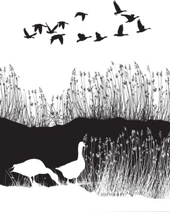 Background with reeds and wild geese
