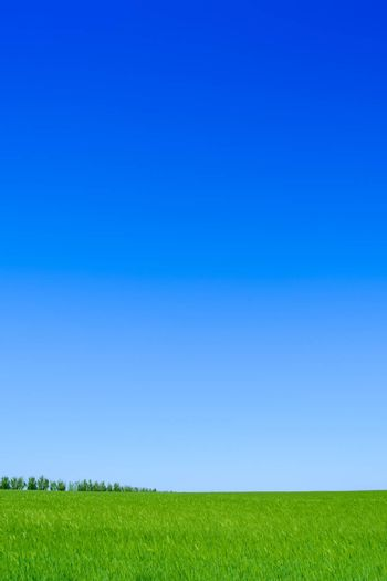 Green Wheat Field and Blue Sky. Landscape Background with Space for Text