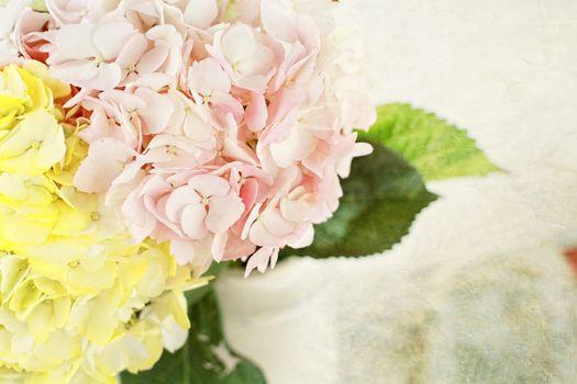 Hydrangeas in Pastel