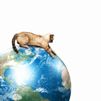 Image of siamese cat playing with globe. Elements of this image are furnished by NASA