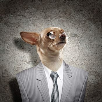 Funny portrait of a dog in the suit on an abstract background. Collage.