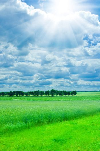landscape of wheat field and green meadow with overcast sky