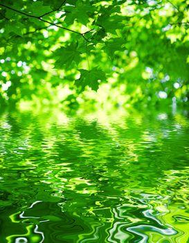 foliage of mapple on a blurry background of foliage