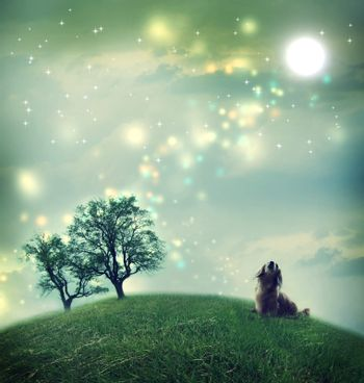 Dachshund dog in a magical landscape