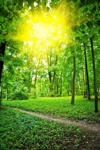 sun on glade in forest