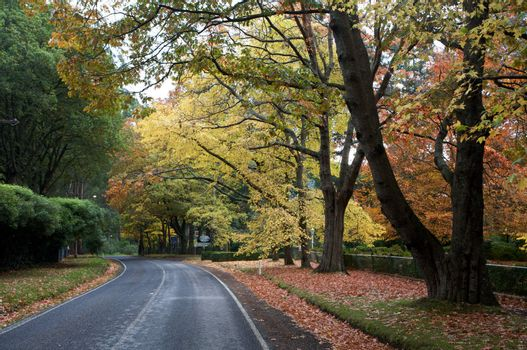 A Beautiful Fall Trees With Road Drive Through a Forrest