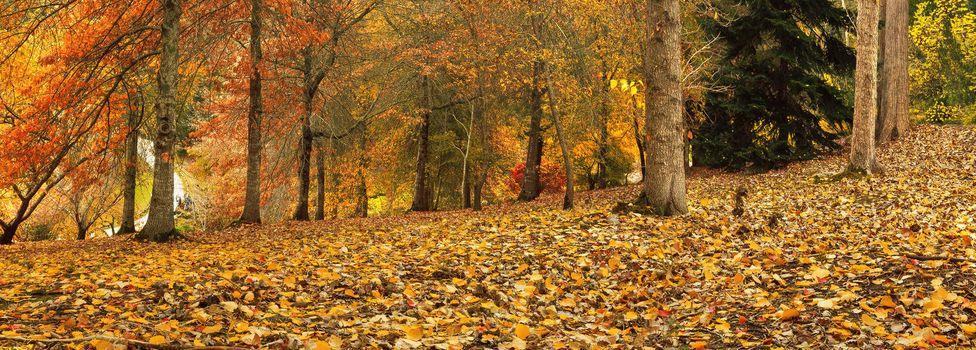 Autumn Panorama 2